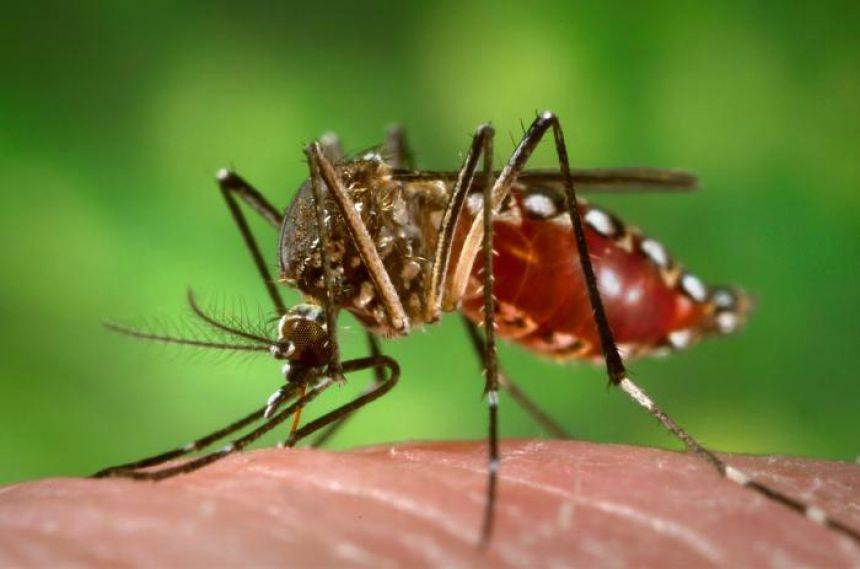 Aumenta número de casos autóctones de dengue no Estado