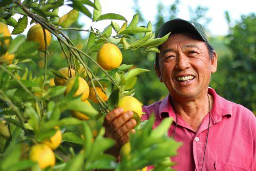 Paraná triplica produção de laranja, com foco na exportação de suco