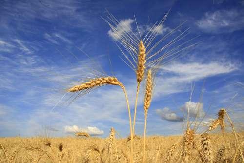 Secretaria da Agricultura mantém previsão de safra recorde de grãos