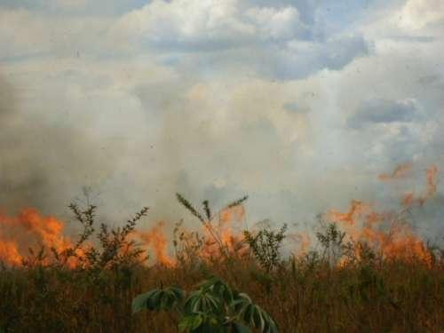 Bombeiros e Defesa Civil alertam para alto risco de incêndio florestal