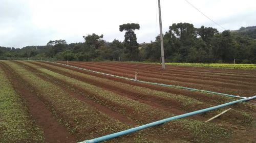 Visitas e Assistência Técnica  Agronômicas