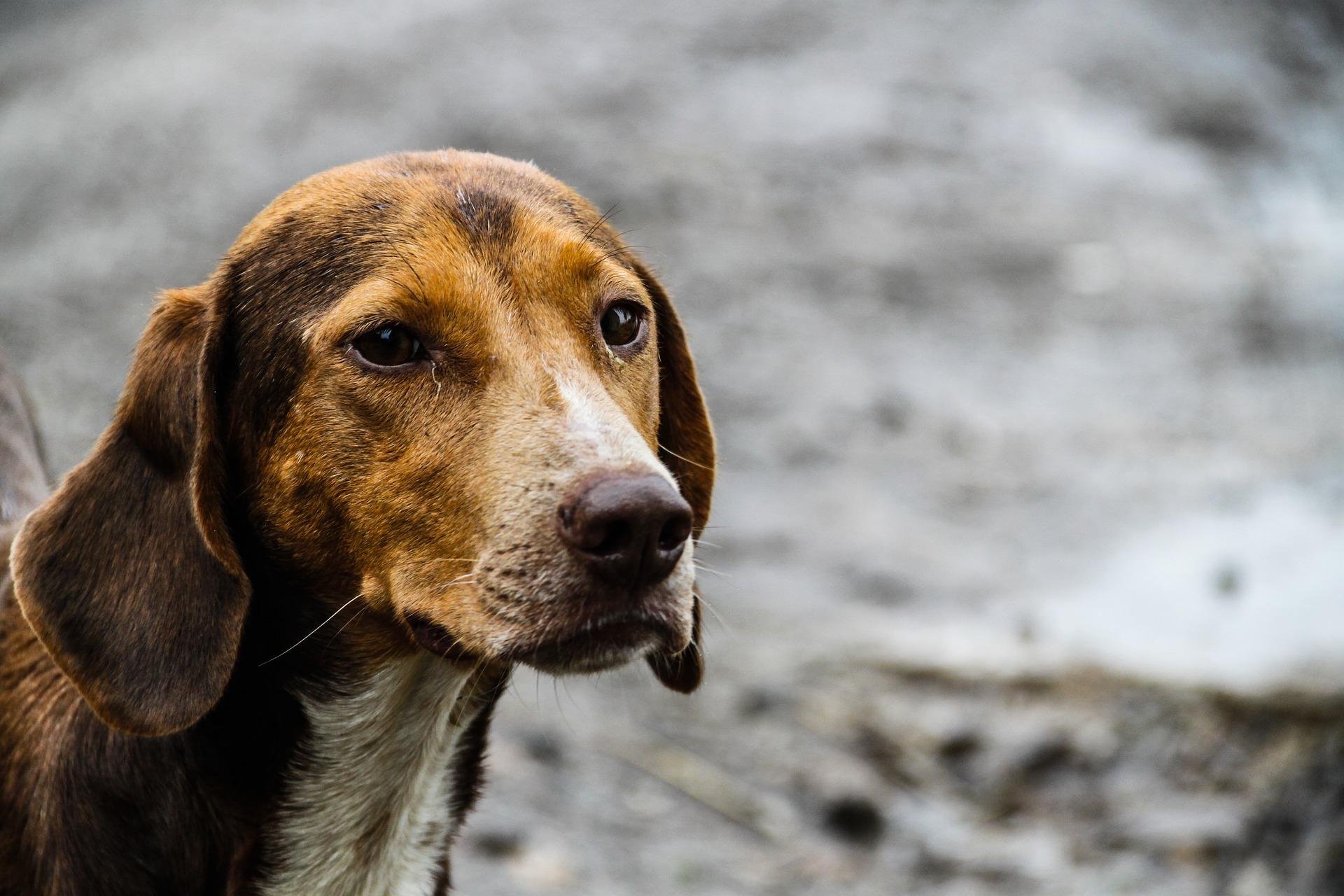 Projeto de castração diminui número de animais nas ruas de Tupãssi