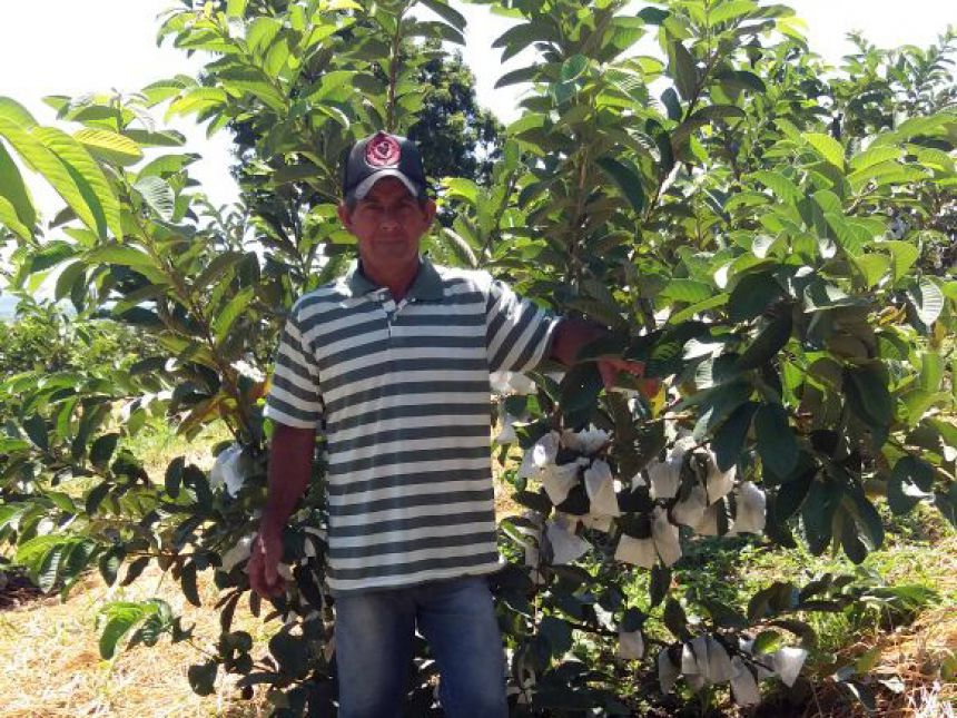 Agricultores investem na produção de frutas para aumentar renda