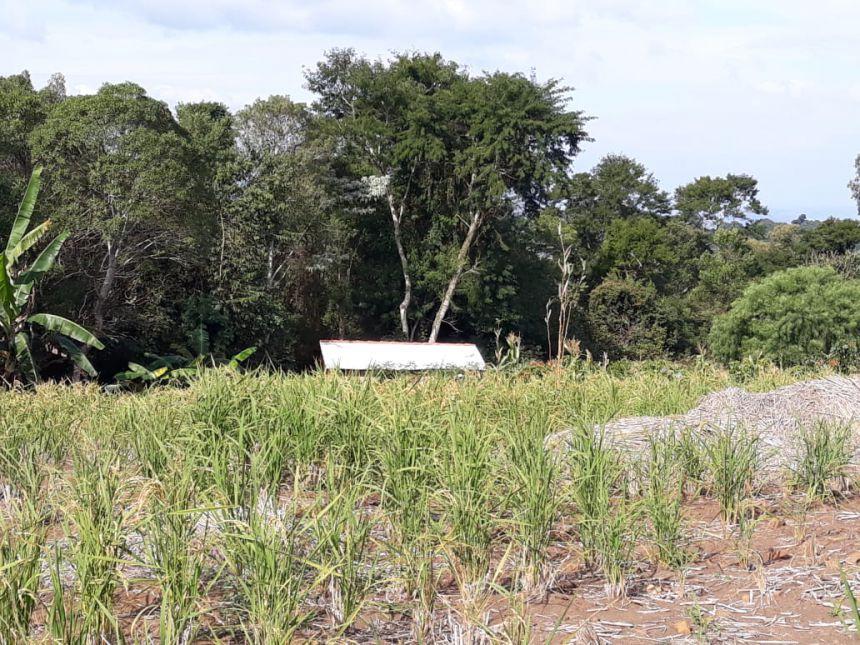 Classe Especial da Escola Correia Defreitas desenvolve projeto sobre cultivo de arroz