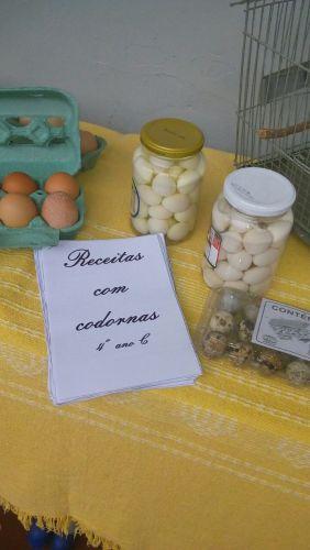 Alunos montam exposição na escola Correia Defreitas