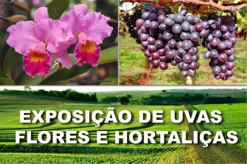 Exposição será uma das atrações da Festa da Uva Fina, de 14 a 18 de novembro, no Parque da Uva