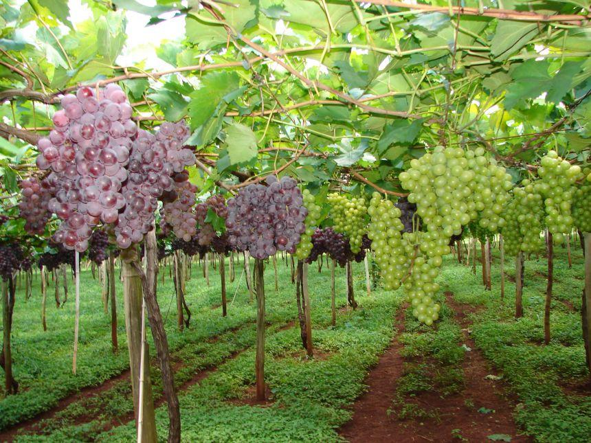 Propriedades da rota de turismo rural de Marialva terão benefícios