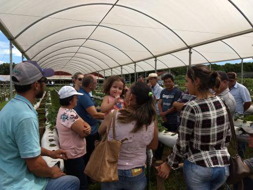 Encontro reúne mais de cem produtores de morango semi-hidropônico em Marialva