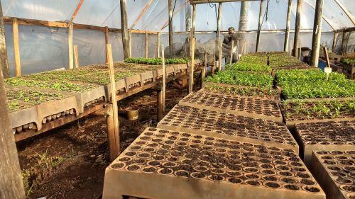 Reformada estufa que cultiva mudas de árvores para Marialva