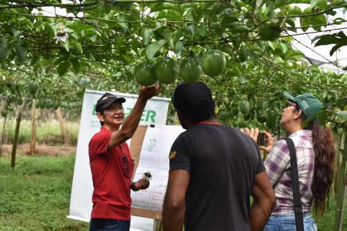 Maracujá é tema de encontro de produtores em Marialva