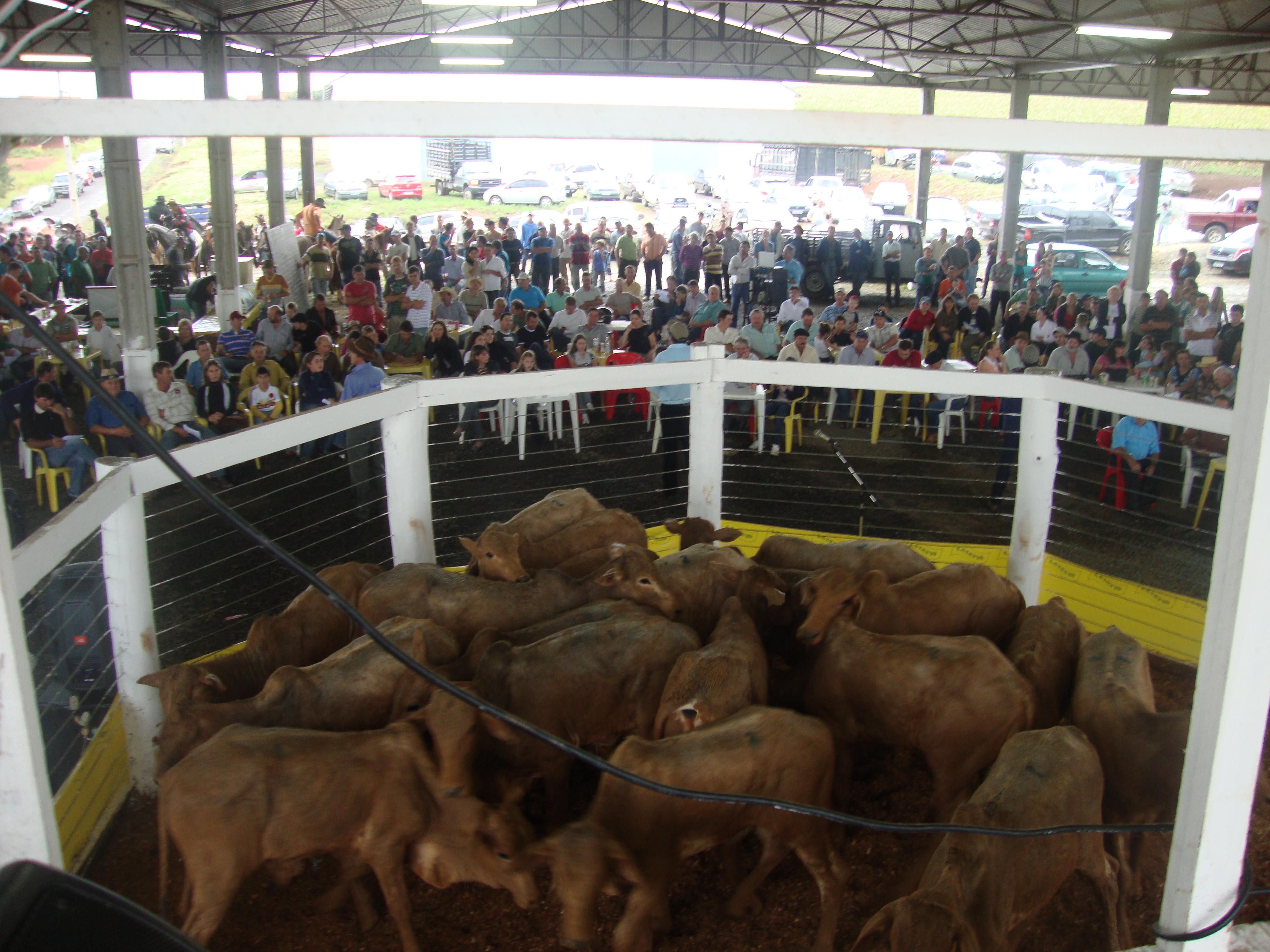 Leil�o inaugural do Centro de Leil�es Emerson Dal Santo, realizado pela Sociedade Rural na pista que foi desativada