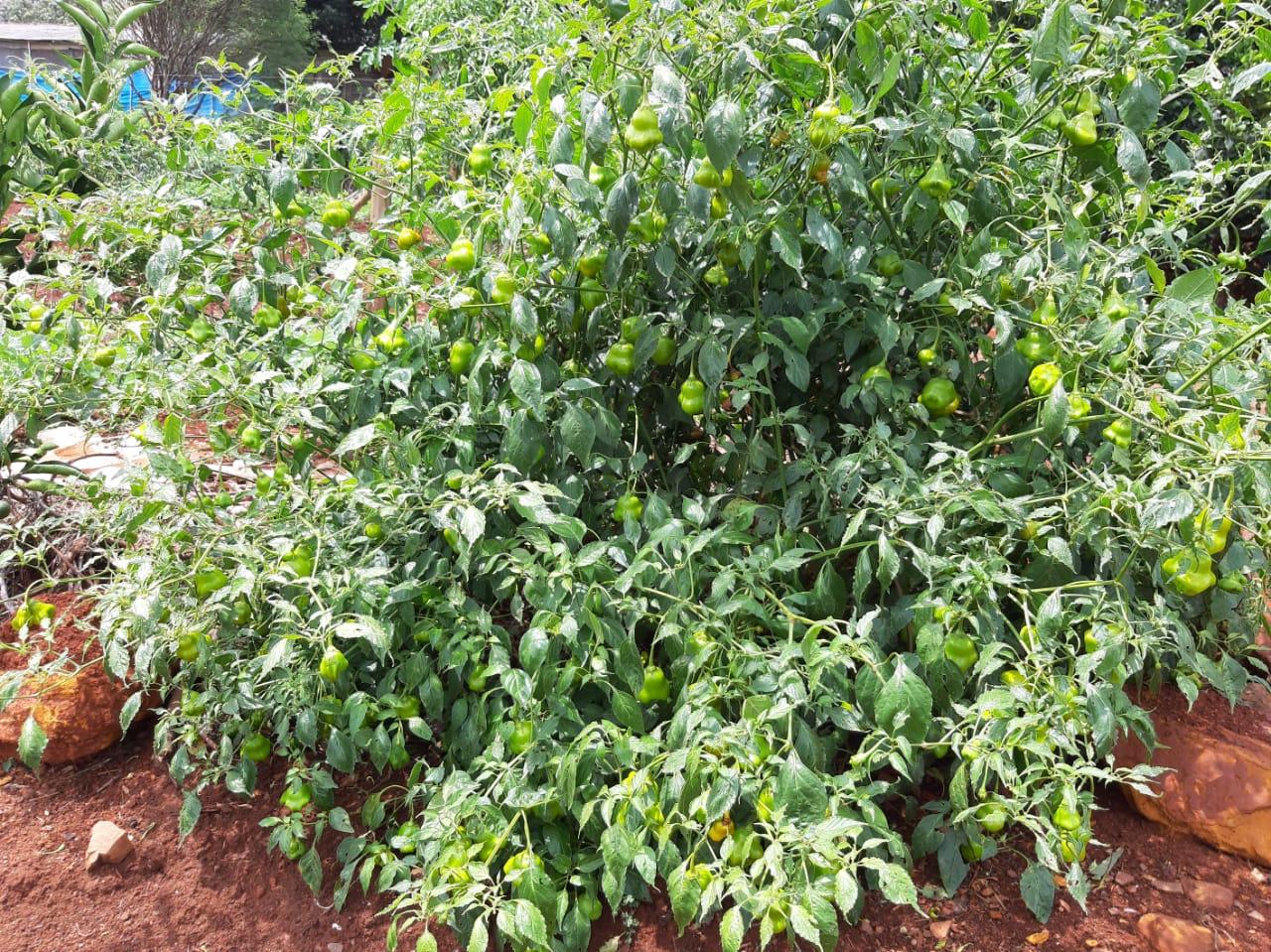 Desenvolvimento da Agricultura Familiar no Município de Iretama