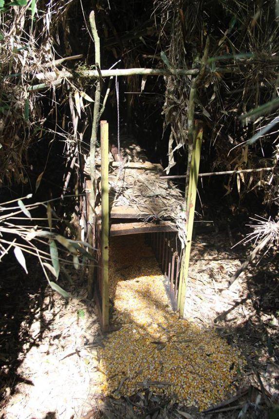 Armadilhas são apreendidas da Unidade de conservação ambiental municipal