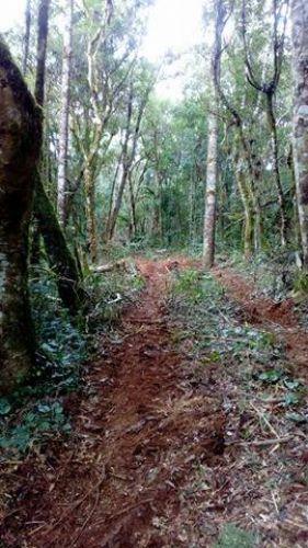 Novos trajetos na Reserva Indigena