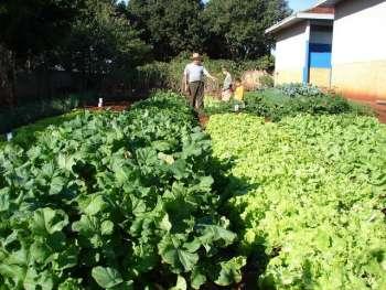 Horta em Marajó atende escola e comunidade