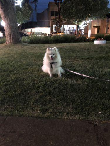 O cachorrinho Theo da nossa amiga Lu Crepaldi também foi ver a praça