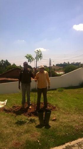 PLANTIO DE ARVORES IPÊS NAS RUAS DO CENTRO DA CIDADE