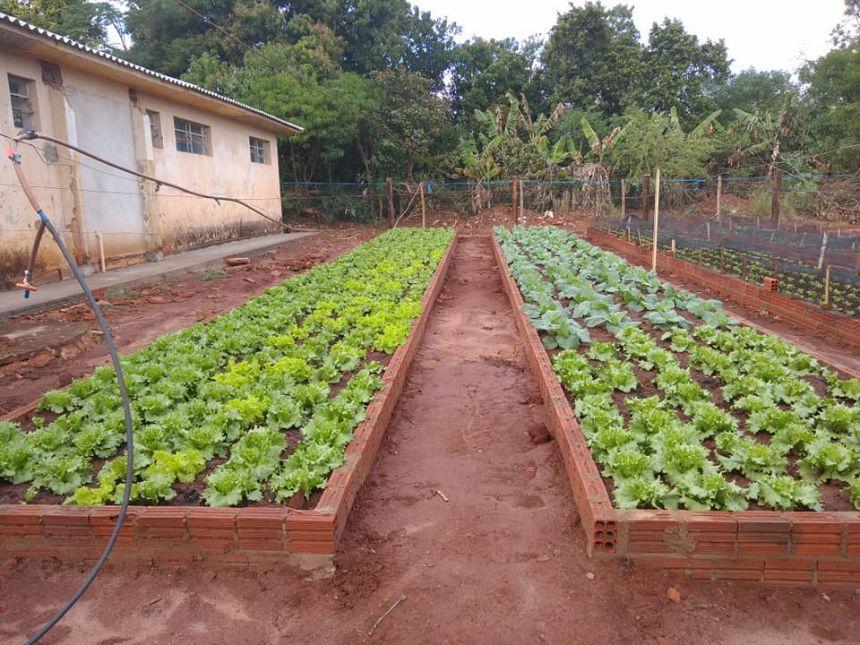 Horta comunitária em Nova Bilac