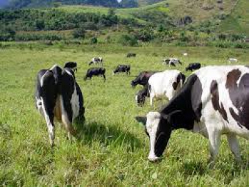 Projeto de incentivo ao desenvolvimento da pecuária leiteira beneficia produtores curiuvenses