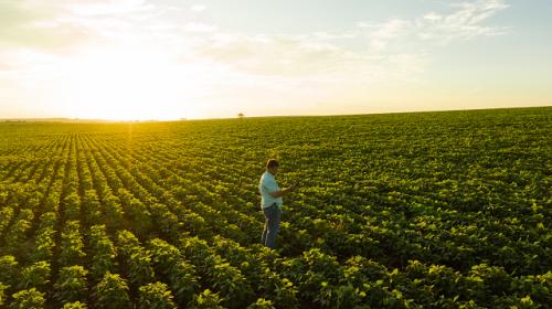 Agropecuária de Primeiro de Maio - Paraná em 2018.