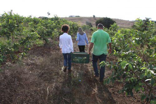 Prefeitura lança programa Ivaiporã Frutifica e incentiva produtores rurais