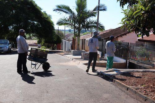Prefeitura de Ivaiporã distribui mudas de Crotalária para combater a dengue