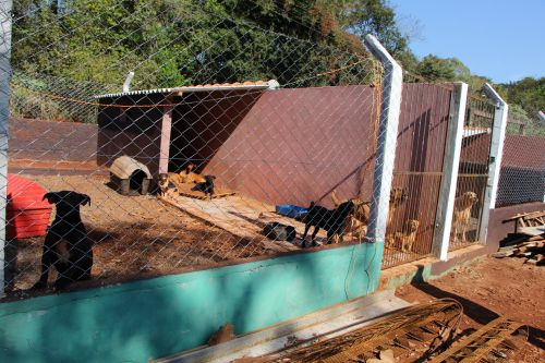 Prefeitura de Ivaiporã investe na reforma e ampliação do Abrigo de Animais Toca de Assis