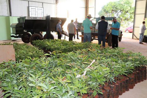 Prefeitura de Ivaiporã entrega mudas de abacate a produtores do distrito do Jacutinga