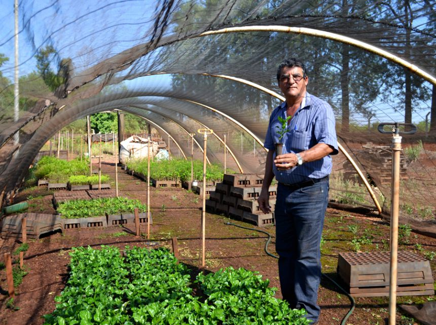 Prefeitura planta centenas de mudas para Agricultura Familiar