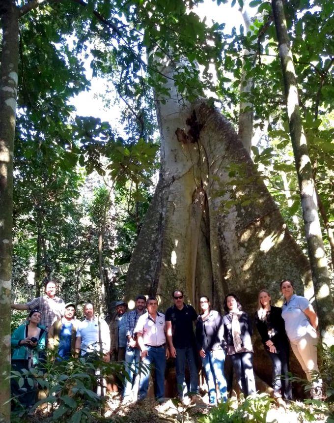 Visitantes se encantam com a enorme Figueira-branca