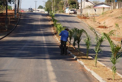 Prefeitura planta árvores nas avenidas Brasil e Paraná