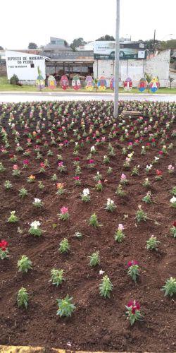 Plantação de Flores