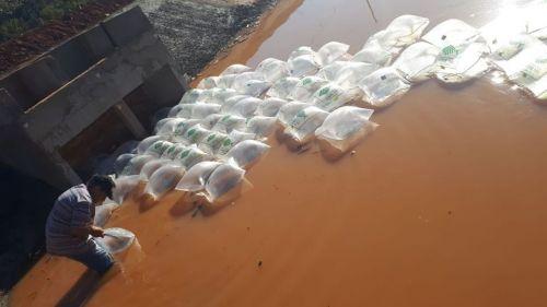 Prefeitura realiza a soltura de 60 mil peixes no Lago Municipal