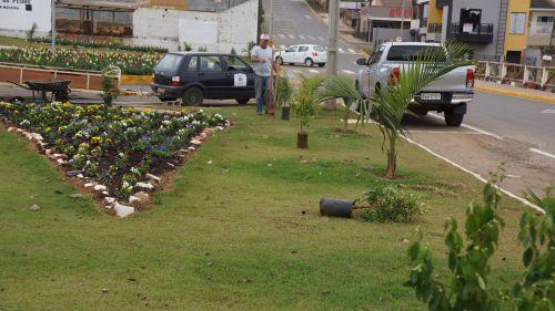 300 mudas de Manaca da Serra