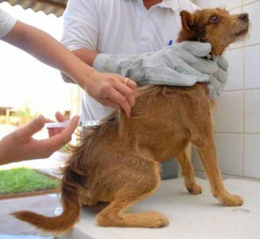 Moradores devem levar os animais (cães e gatos) para vacinarem