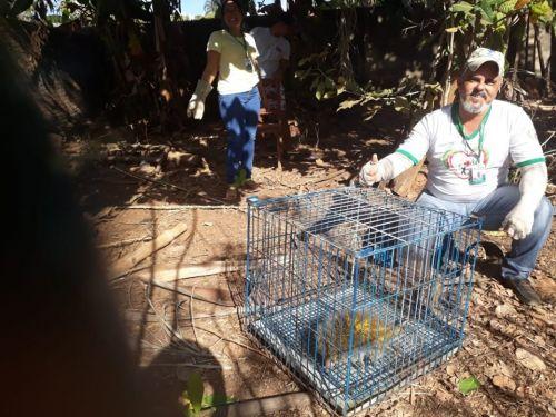 Preservar a fauna é dever de todos!