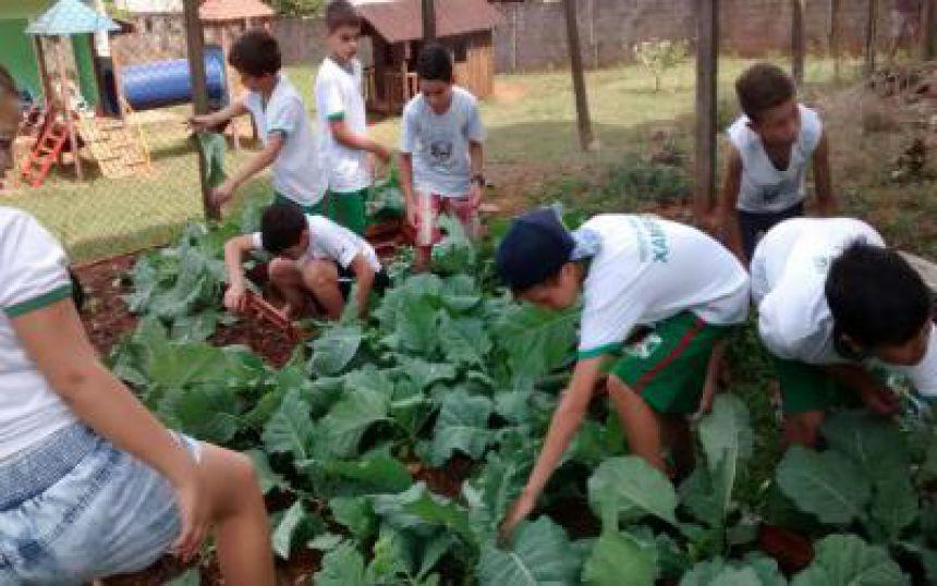 Projeto FHE (Familia, Horta, Escola)