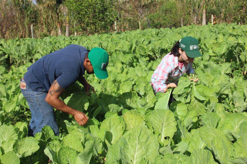 Dia Mundial da Alimentação: Uma reflexão sobre alimentação saudável