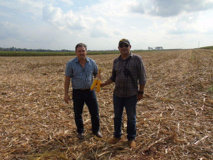 Em Floresta safra do Milho Safrinha promete dar bons resultados