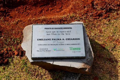 AÇÃO AMBIENTAL CELEBRA O DIA DO PAU-BRASIL COM PLANTIO DE MUDAS