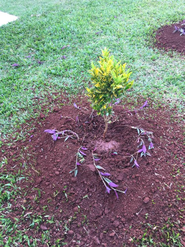 Curso de jardinagem foi promovido para agricultoras de Cafelândia