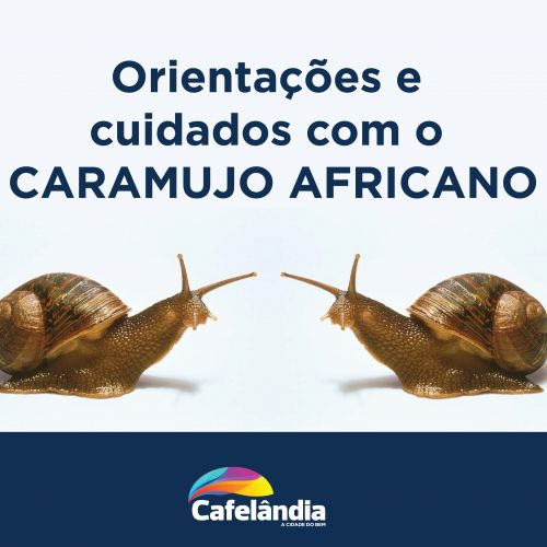 Secretaria de Saúde de Cafelândia alerta sobre os caramujos africanos