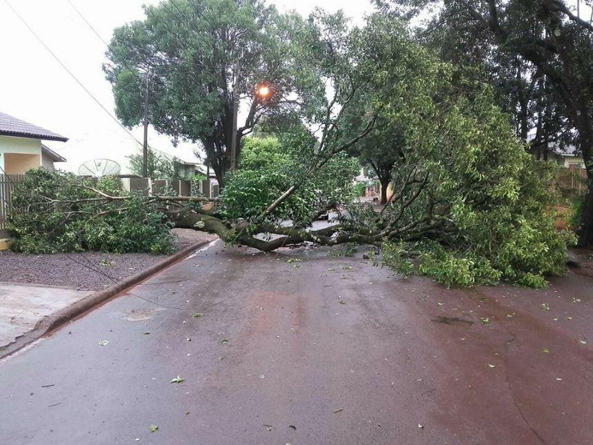 Temporal derruba várias árvores em Ubiratã