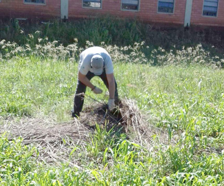 Escorpião amarelo é encontrado em Ubiratã