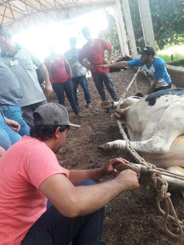 Realizado em Ubiratã Curso de Casqueamento em Vacas Leiteiras