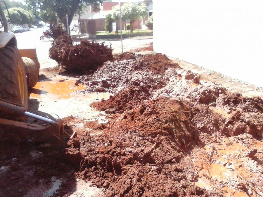 Antes da retirada de troncos de árvores procure a Sanepar