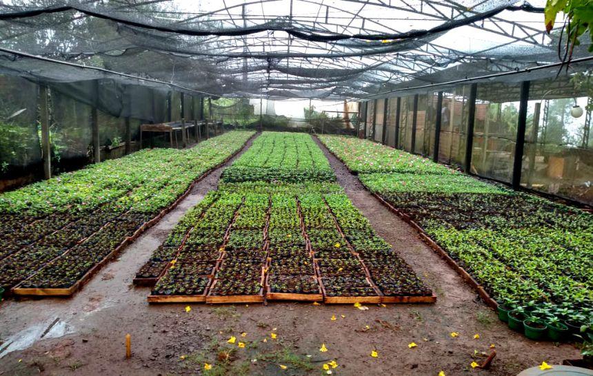 Flores típicas de inverno serão plantadas em Ubiratã