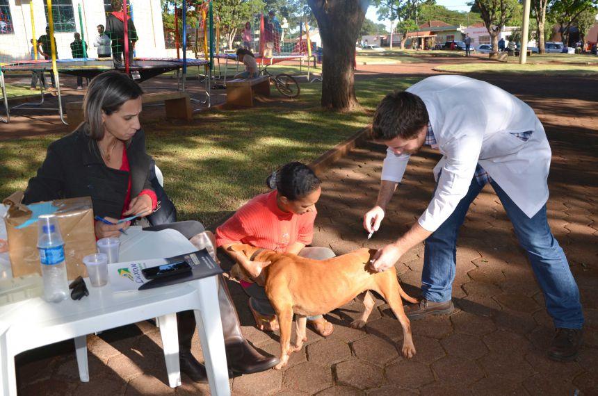 Vacinação de animais durante a Semana Sempre Yolanda