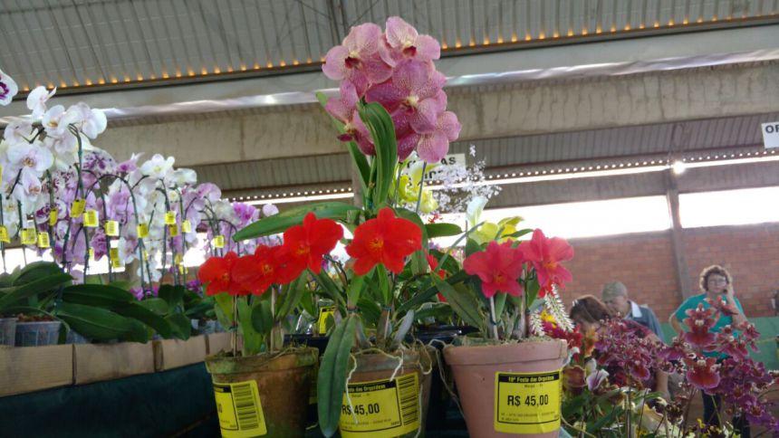 Prefeito Baco participa de reunião da Amop e festa da Orquídea