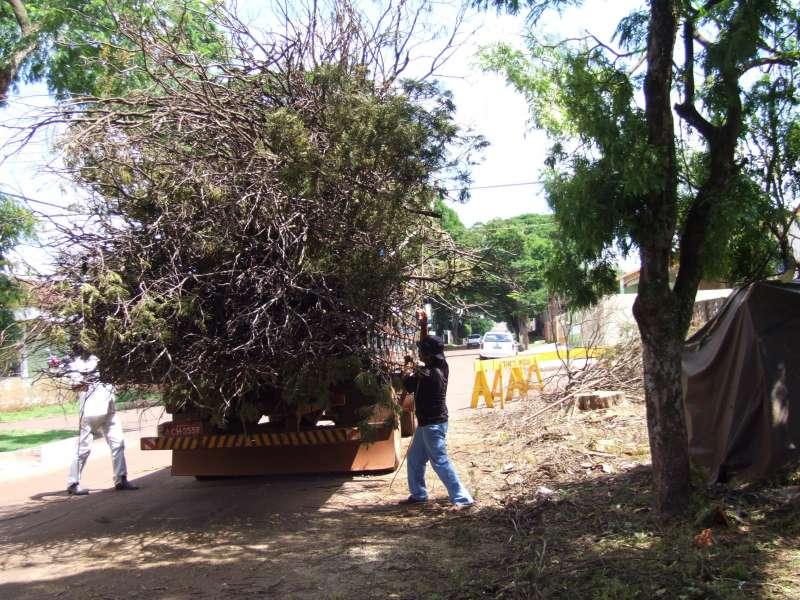 Os galhos resultantes das podas e cortes de árvores serão recolhidos por caminhões terceirizados pelo município; o valor desse serviço está incluso na taxa de limpeza pública